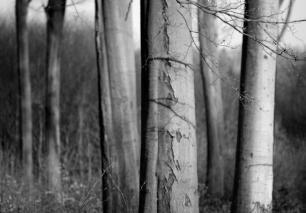 Voděradské bučiny © Jirka Chomát